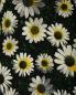 Платье-мини с цветочным узором Moschino Cheap&Chic  –  Деталь