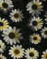 Платье-мини с цветочным узором Moschino Cheap&Chic  –  Деталь1